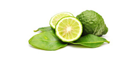 Kafir-Lime-Leaves-light-small